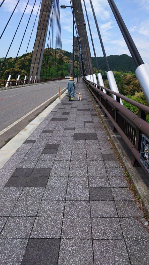 橋を歩くフーちゃんの写真