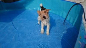 フーちゃん、水遊び
