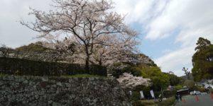 城山公園の桜の写真