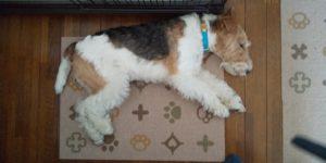 休息を取るフーちゃんの写真