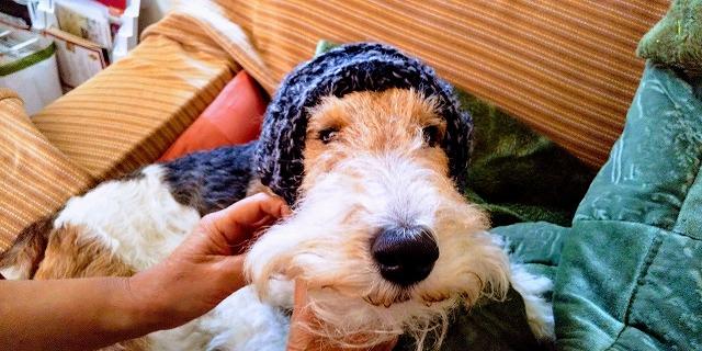 フーちゃん、帽子の写真